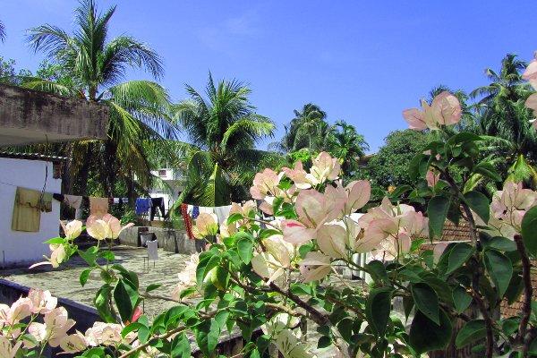 Indien 2011-11 Kochi 2
