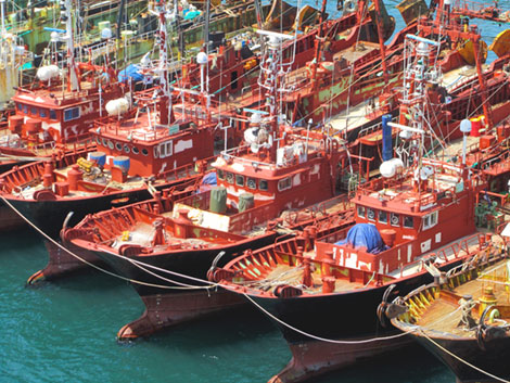 Fischerboote im Hafen von Busan