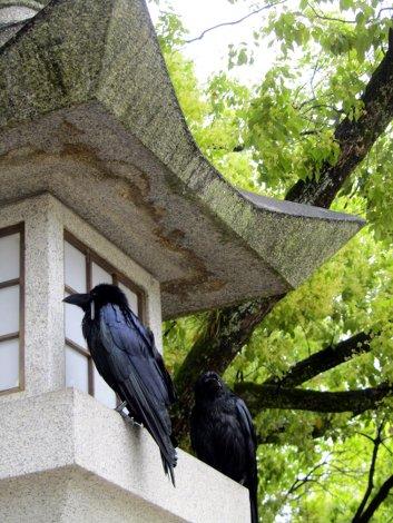 Krähen suchen Schutz vor dem Regen im Friendenspark von Hiroshima