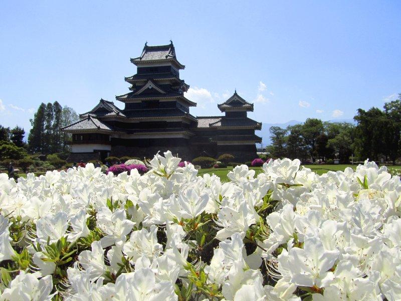 Das beeindrucke hölzerne Schloss von Matsumoto und seine blühenden Gärten