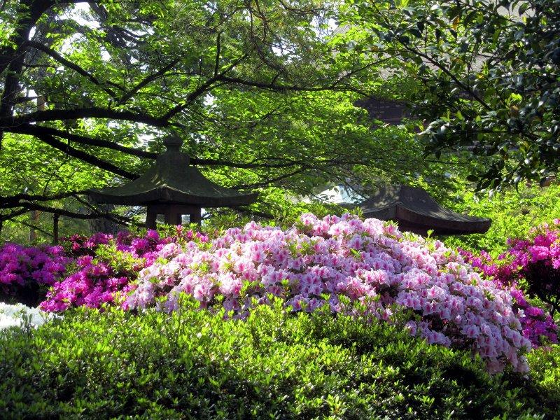 Blühende Sträucher im Garten des Tempels von Nagano