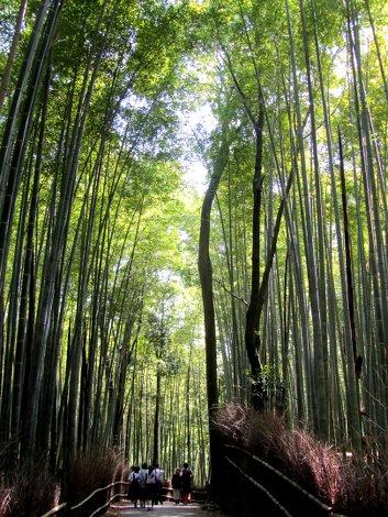 Der Arashyama Bambus-Hain und eine Schulklasse