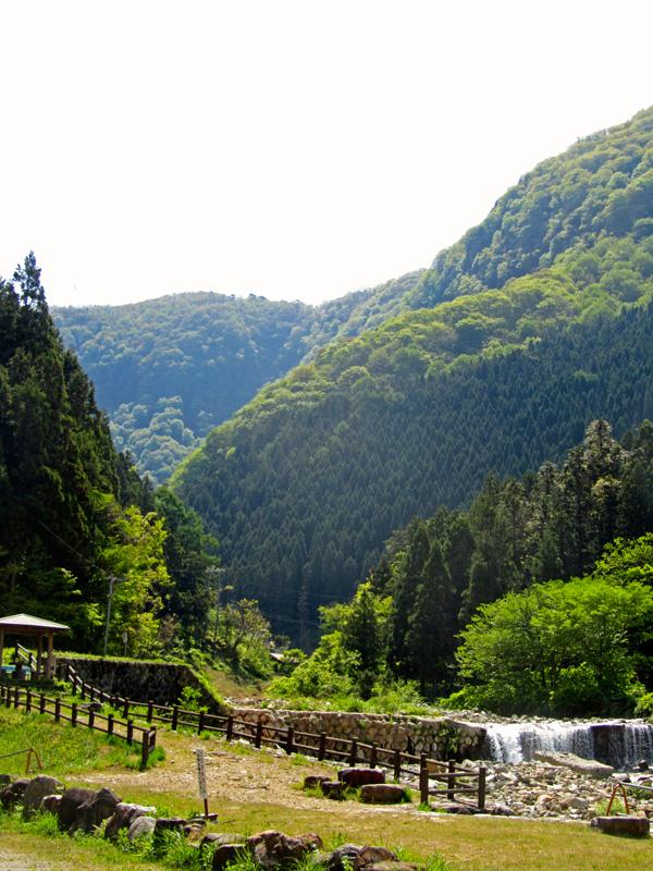 Der Eingang zum tiefgrünen, bewaldeten Tal der Snow Monkeys