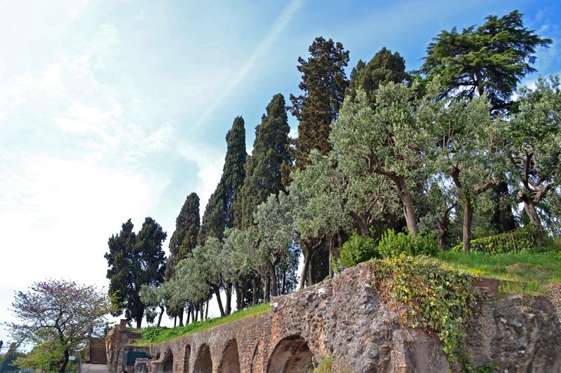 Bäume wachsen auf den Grundmauern der kaiserlichen Paläste auf dem Palatin