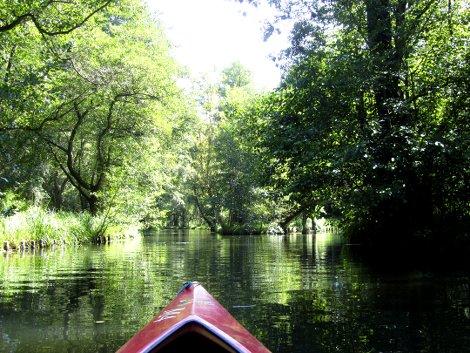 Auf dem Wasser im Spreewald, grüne Bäume links, rechts, geradeaus; die Spitze eines roten Kanus am unteren Bildrand