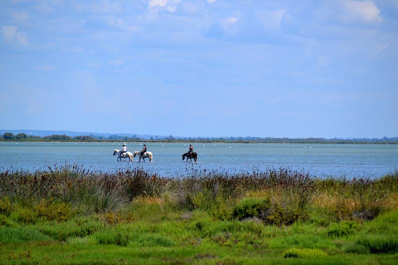 3 Pferde waten mit ihren Reitern durch die Lagune der Camargue