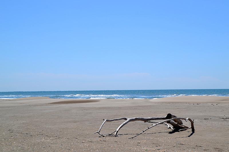 Der weite, leere Strand der Camargue - im Vordergrund ein ausgebleichtes Stück weißen Treibholzes