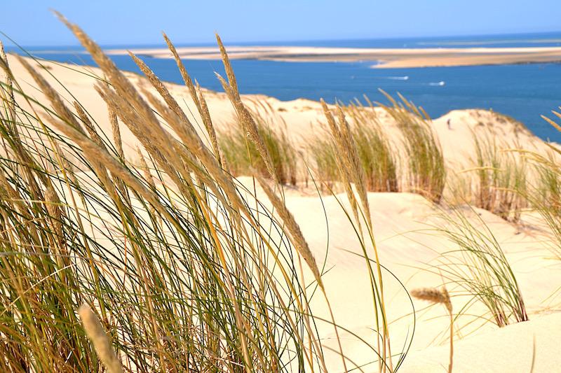 Gräser auf dem Sand der Dune du Pilat, der Atlantik im Hintergrund