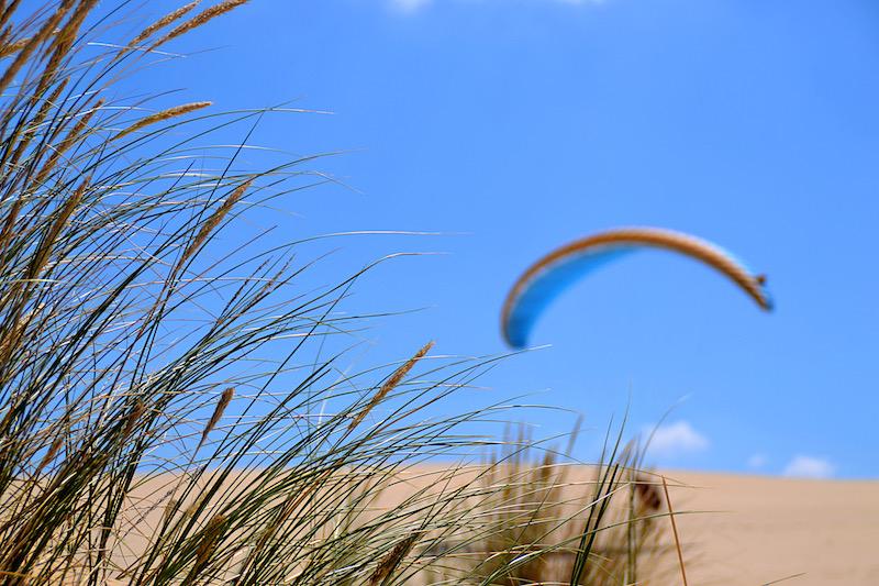 Gräser auf der Dune du Pilat - unscharf im Hintergrund: ein aufsteigender Segelflieger