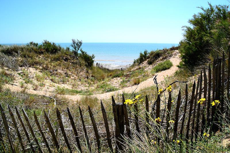 Blick über Dünen und Büschen hinüber auf den Strand der Ile de Ré - dahinter glänzend blau der Atlantik