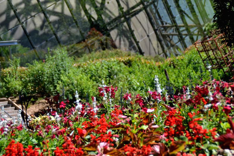 Rote Blumen vor einem gläsernen Pavillon