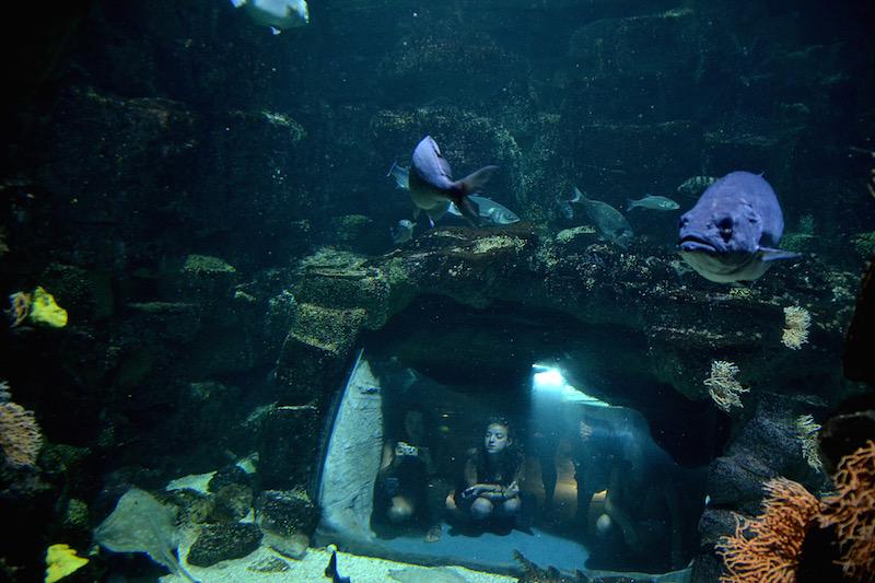 Blick durch ein Aquarium hinüber zu einem anderen Fenster, hinter dem Besucher kauernd hocken