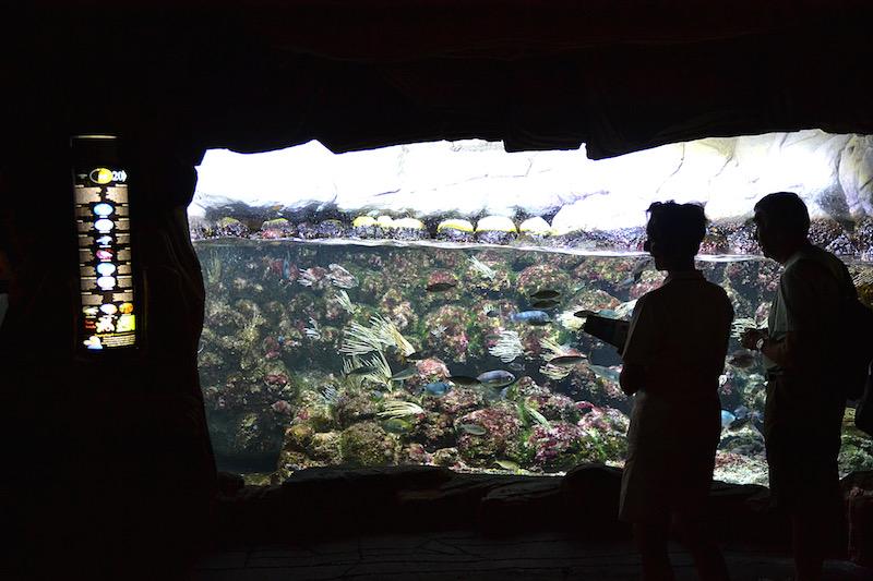 Zwei Besucher stehen vor einem hell erleuchteten, tropischen Aquarium
