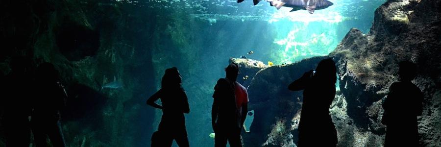Vor dem Haibecken im Aquarium von La Rochelle stehen Besucher; ein Bullenhai zieht seine Bahnen