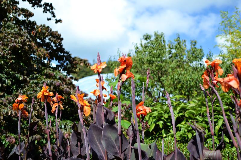 Bunte Blumen in den Gärten des Eden Project in Cornwall