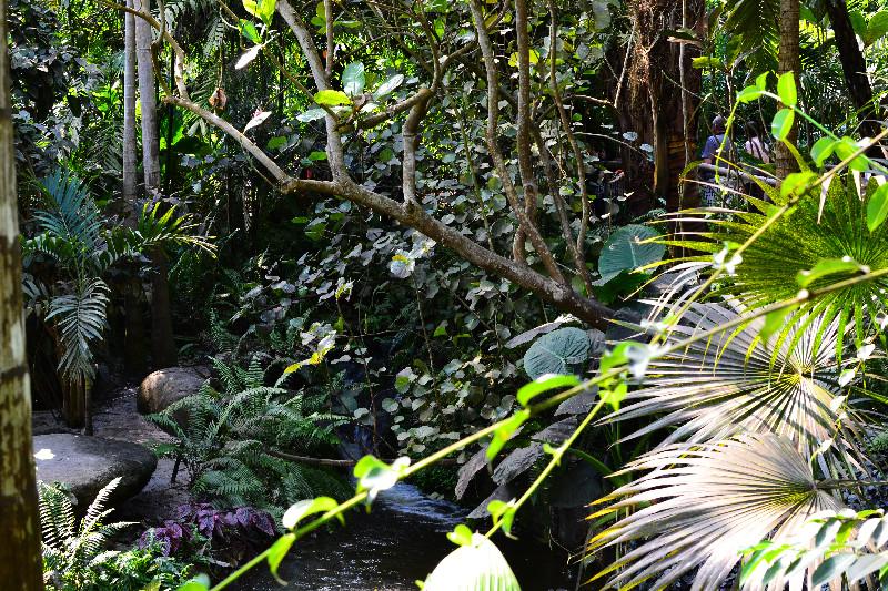 Im tropischen Dschungel des Eden Project im sonst gar nicht so tropischen Cornwall