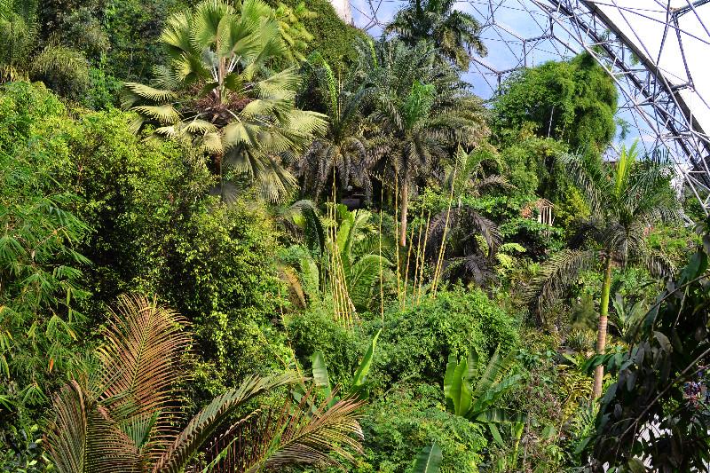Der tiefgrüne Dschungel in einem der gewaltigen Biome des Eden Project