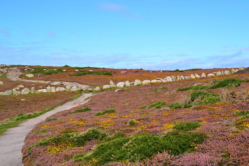 Die Wege durch die Heide in der Nähe von Land's End, Cornwall