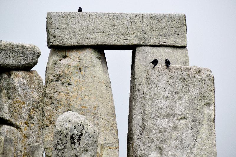 Raben sitzen auf den jahrtausendealten Steinen von Stonehenge