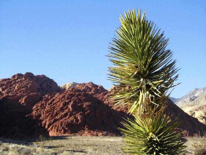 Ein Naturschauspiel: Red Rock Canyon nahe Las Vegas