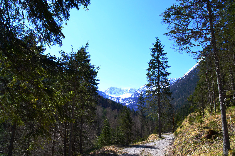 Lichte Wälder auf unserer Bergtour