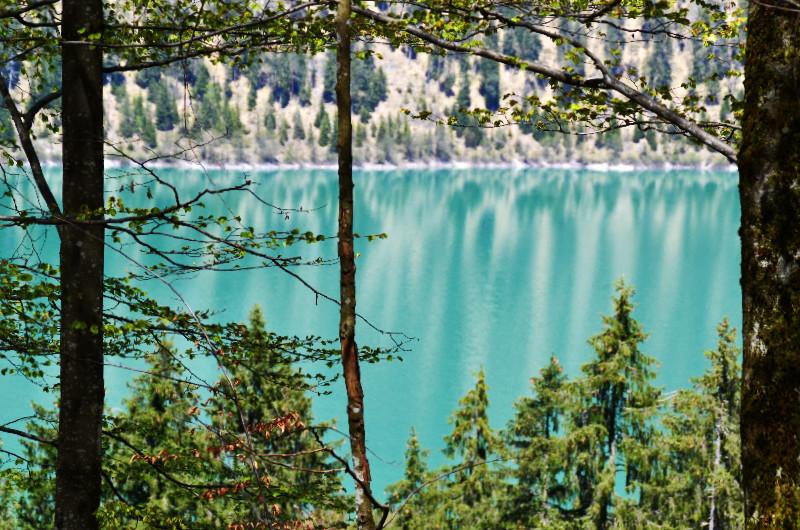 Der Sylvensteinsee blitzt zwischen den Bäumen hervor