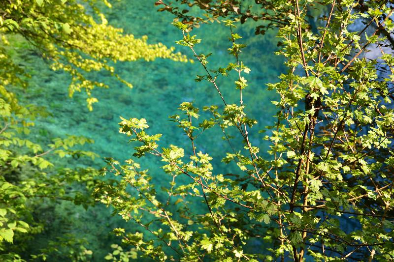 Blau und Grün am Blautopf in Blaubeuren