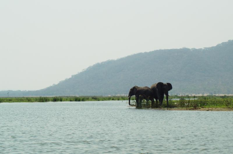 Zwei Elefanten am Flussufer im Liwonde Nationalpark, Malawi