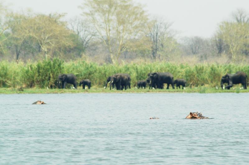 Elefantenherde in der Ferne im Liwonde Nationalpark, Malawi