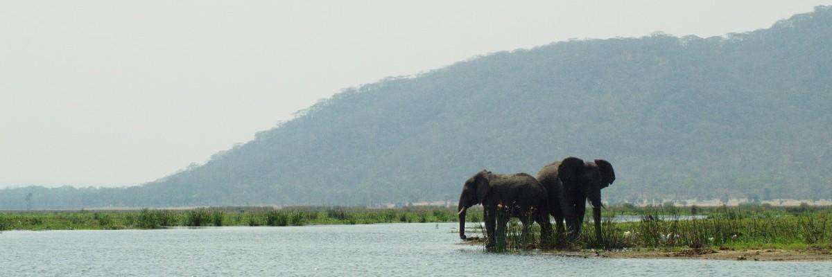 Zwei Elefanten stehen am Shire River im Liwonde Nationalpark, Malawi