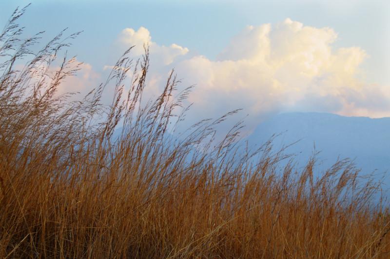 Golden wiegt sich das Gras auf dem Mulanje Massiv