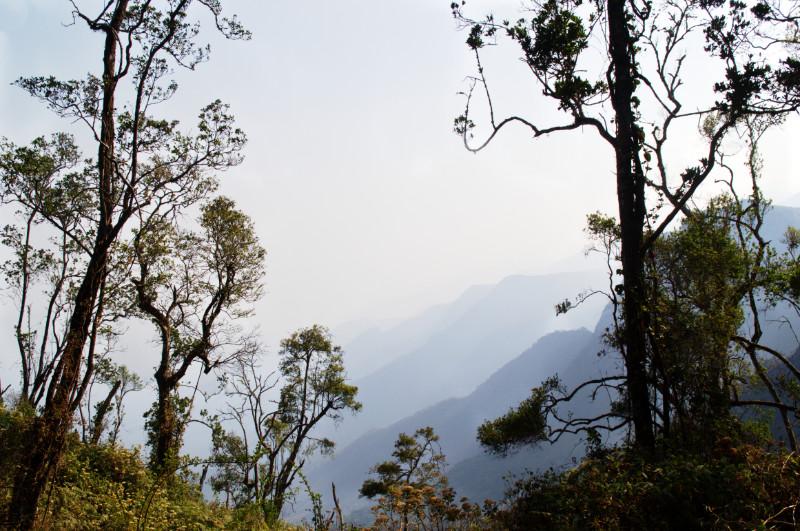 Wälder an den Hängen des Mulanje Massivs, Malawi