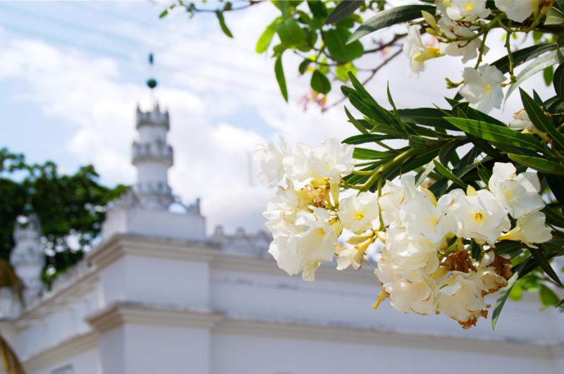 Moschee und Blüten in Inhambane, Mosambik