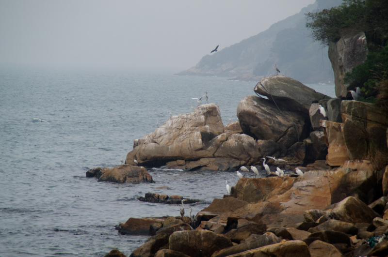 Hongkong: Vögel auf Lamma Island