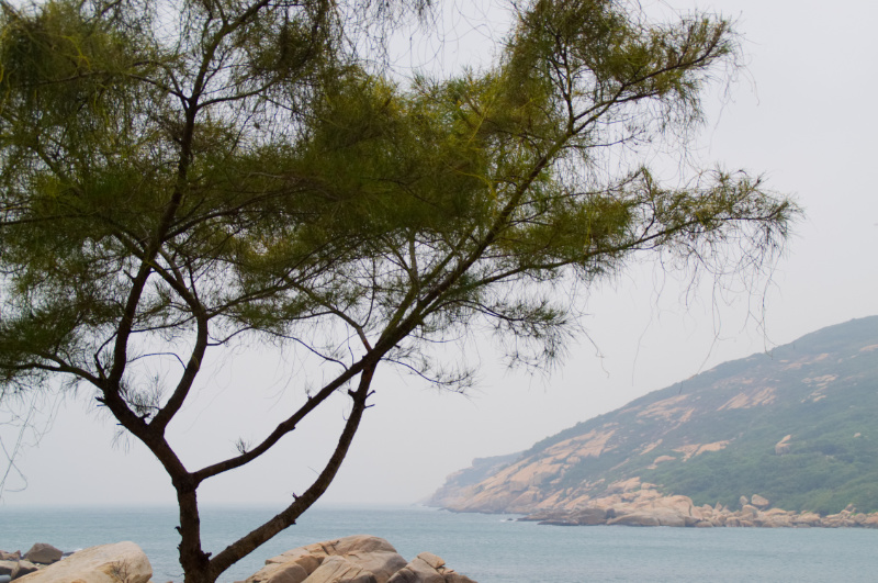 Hongkong: Baum am Strand von Lamma Island