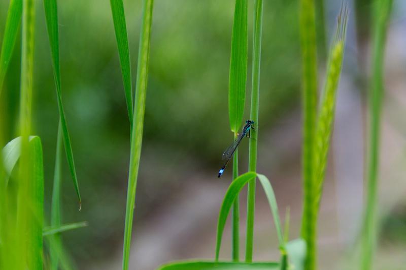 Padua: Libelle im Botanischen Garten