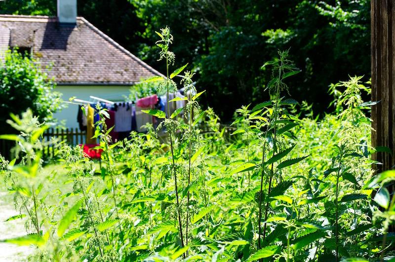 Brennesseln und trocknende Wäsche im Schlosspark Nymphenburg