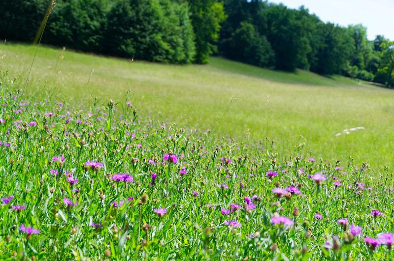 Blühende Blumen im Schlosspark Nymphenburg