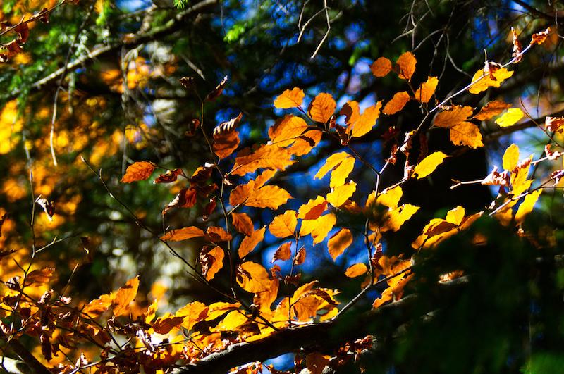 Bunte Blätter an einem Baum im goldenen Herbst