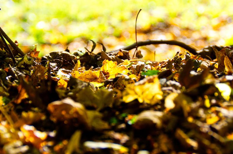 Buntes Laub im goldenen Herbst auf dem Boden