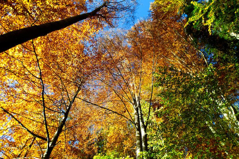Buntes Herbstlaub in einem Wald am Tegernsee