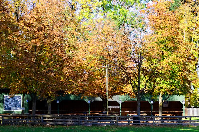Buntes Herbstlaub über einem leeren Biergarten in München
