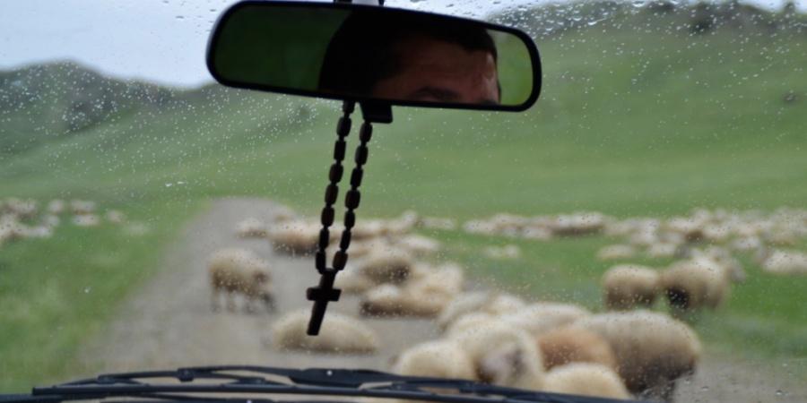 Schafe auf einer Landstraße in Georgien