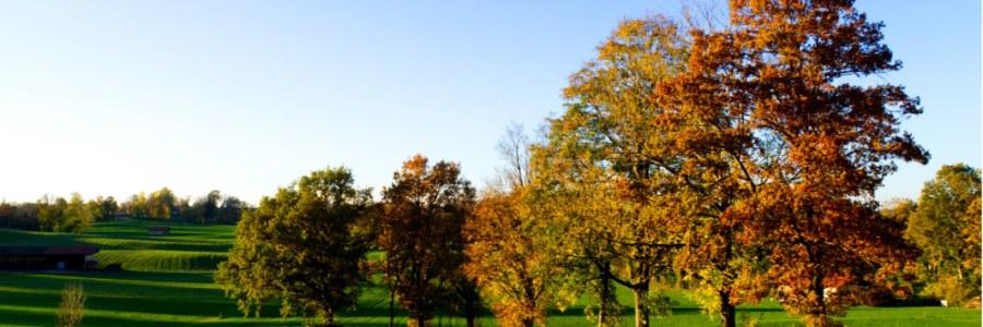 Bäume mit buntem Herbstlaub in der Nähe vom Tegernsee