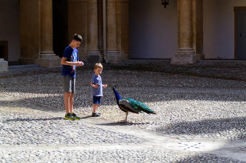 Zwei Jungs füttern einen Pfau im Innenhof von Schloss Eggenberg