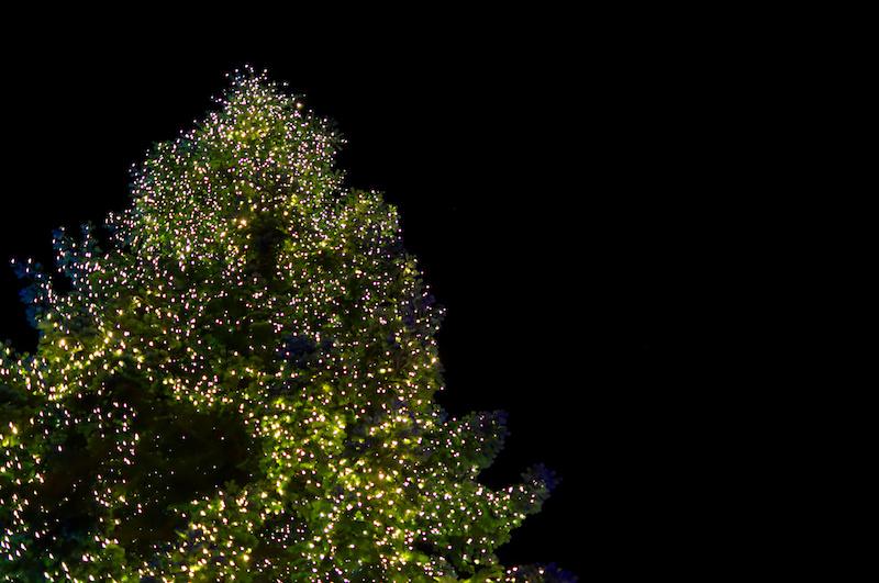 Beleuchteter Weihnachtsbaum am Abend im Phantasialand