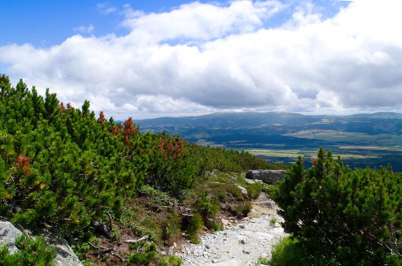 Wanderweg, links und rechts Latschenkiefern - im Hintergrund die weite Ebene unterhalb der Hohen Tatra