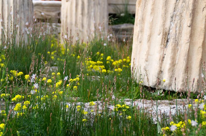 Gras an den Säulen der Akropolis