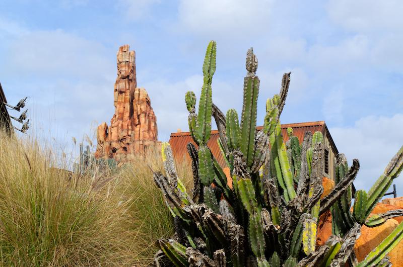 Big Thunder Mountain und Kaktus in Walt Disney World