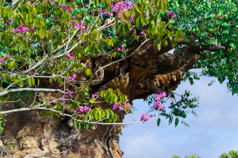 Der Tree of Life in Disney's Animal Kingdom